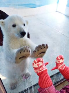 Paws and Mitts