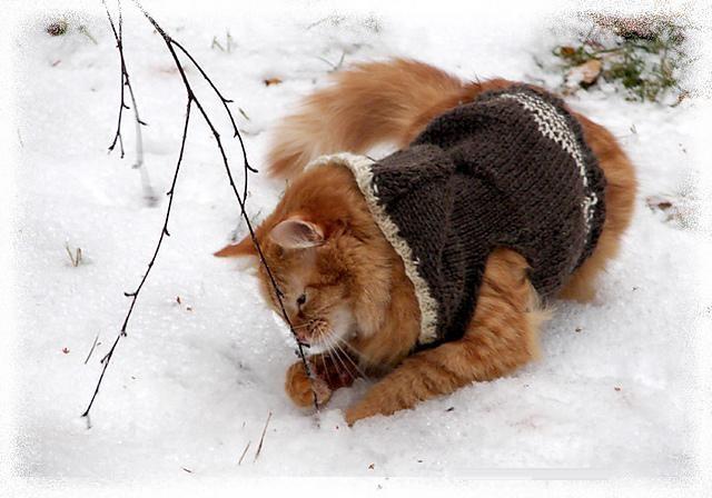 zima (3).jpg